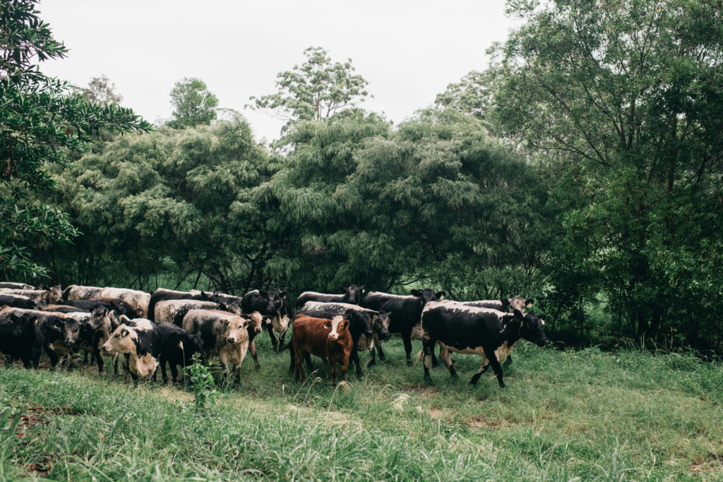 bellingdale farm